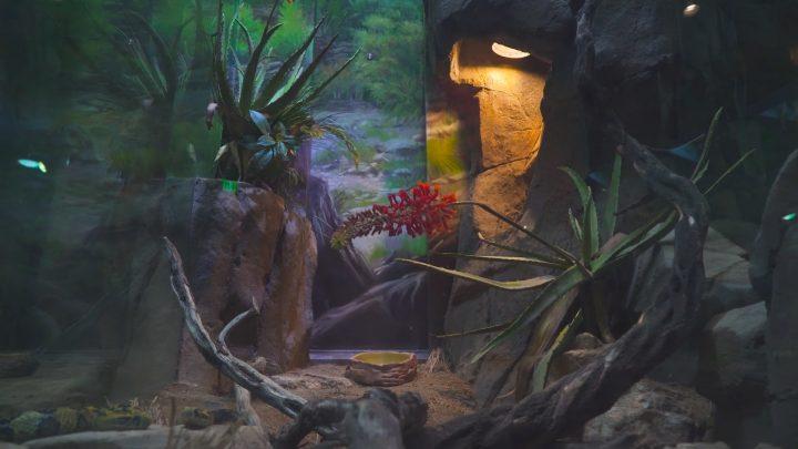 boulderscape-lazoo-19