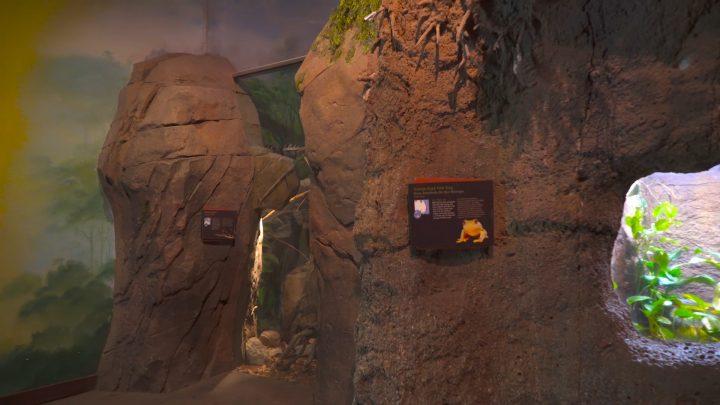 boulderscape-lazoo-2