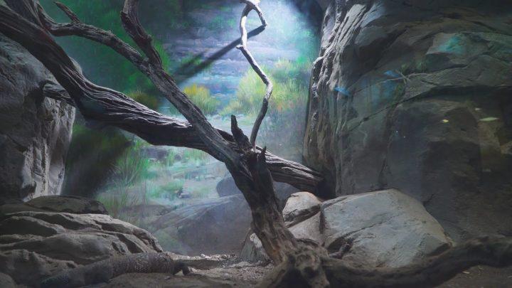 boulderscape-lazoo-20