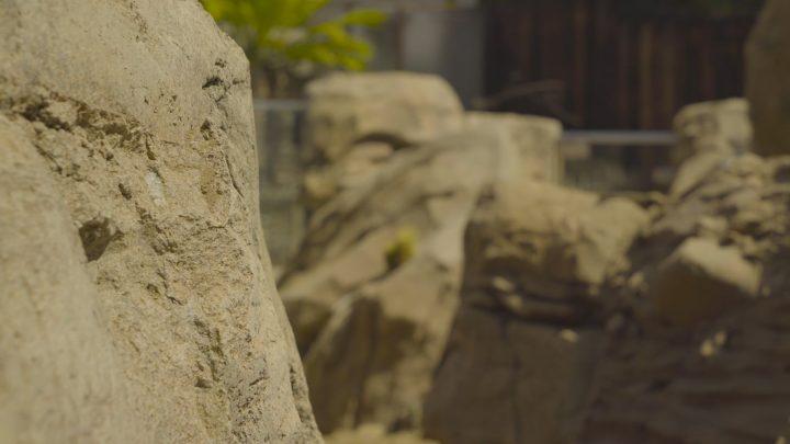 boulderscape-lazoo-31